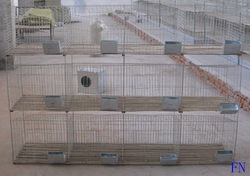 Rabbit Farming Cages(China (Mainland))