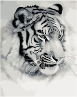 Framed Tiger King Oil Painting DIY Paint by Numbers 50x40cm (20x16'') PBN BW7084