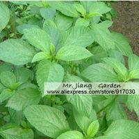 Jew's Mallow Seeds * 1 Pack  ( 10 Seeds ) * Mulukhiya * Molokhiya * Corchorus olitorius Linn * Vegetable * Free Shipping
