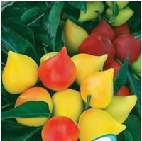 30Pcs/Pack Big bonsai seeds ornamental peach tree seeds for home garden beatiful flower High Survival Free Shipping