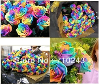 400 NEW RAINBOW ROSE SEEDS ONLY $3.99 OWNER JUST WANTED TO WIN GOOD REPUTATION * MULTI-COLOR RAINBOW ROSE * FREE SHIPPING