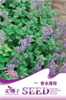 5 Pack 200 Seed Mint Seeds Perfume Catnip Mint Mentha Seed Hot D044