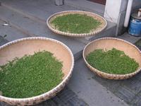 New tea, Premium Hangzhou West Lake( Xihu tea) Dragon Well tea,Certified Organic,Healthy affordable bag, 250g, Free shipping