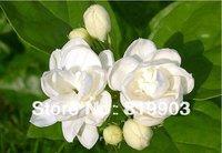 Original package Jasmine seed white fragrance