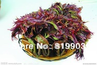 Original Package Cedar vegetable seeds spring and autumn sowing 90 pcs