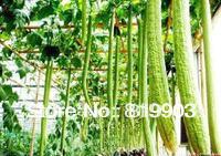 Towel Gourd Seeds green vegetables 50 pcs