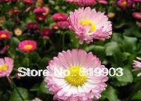 flower seeds Half-sticks of lotusScientific classification Red sun plant