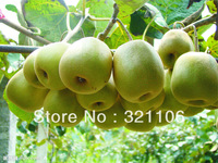 100seeds + free shipping kiwi fruit seed, the king of the fruit