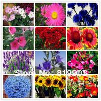 Four seasons type flower seeds bundle 26 type  780 PCS