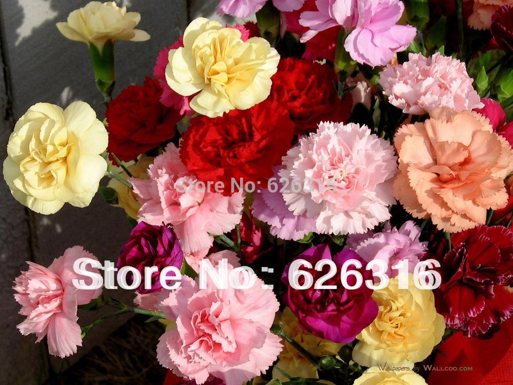 купить Карликовое дерево 1 90pcs/diy недорого