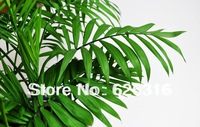 20pcs/lot GOLDEN YELLOW PALM SEEDS Chrysalidocarpus seeds POT TREE PLANT GARDEN BONSAI TREE SEED DIY HOME PLANT