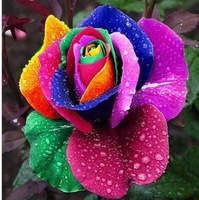 Free shipping 150pcs/lot rainbow colors Roses seeds multicolour rose seeds Flowers planting