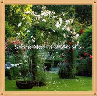 Diy Home Garden 400 Pcs Of  White Climbing Rose Seeds Free Shipping