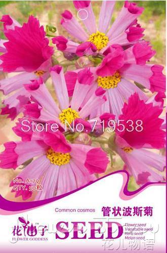 Tubular calliopes high quality flower bonsai seeds new arrival a179 / 1 Lot 50 seeds(China (Mainland))