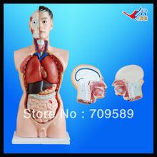 medical mannequin promotion