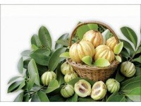 Original PURE Garcinia Cambogia Natural 120