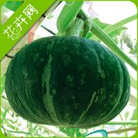 Free Shipping 1 Pack 8 Seeds Green Pumpkin Seeds