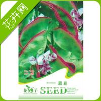 1 Pack 6 Vegetable seeds Purple Haricot Seeds