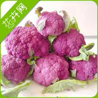 1 Pack 20 Seeds Purple Cauliflower Vegetable Seed