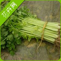1 Pack 60 Seeds Celery Vegetable Seeds