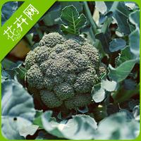 1 Pack 20 Vegetable Seeds,Broccoli Seeds