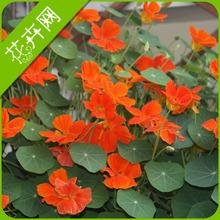 wholesale dry lotus
