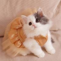 Pet clothes evening dress princess dress pet clothing ballet lace saidsgroupsdirector skirt
