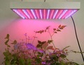 15W led growing salat lettuce indoors light, red &blue 1:1,red 630nm