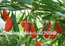 GREENFIELD 500g 2015 NEW CROP Chinese Ningxia Organic Goji Berry Wolfberry Chinese Medlar Dried Goji