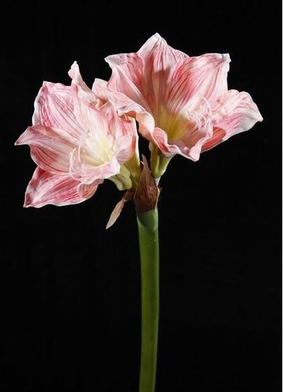 "Free Shipping 72cm real touch amaryllis, real touch flowers, artificial amaryllis for home decoration 3 pieces/lot, 28.5""(China (Mainland))"