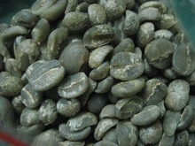 Coffee Yunnan Gaoligongshan mountain SHB green coffee bean WBC Blend Fruit