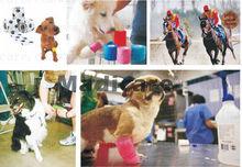 2.5 cm x 4.5 m vetflex, Vet cohésif bandage chien, Chat, Cheval bandage(China (Mainland))