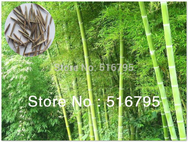 Ikea Badkamer Mengkraan ~ bamboe planten Promotie