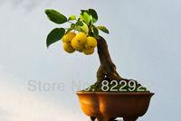 Карликовое дерево 58 , Frys &