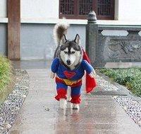 Blue Red Puppy Pet Dog Clothes Costumes Superman Apparel T Shirt Suit Size XS,S,M,L,XL