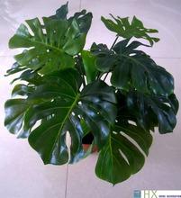 Frete grátis ( 13 folhas / peças ) Turtle folhas das plantas, árvore artificial , plantas artificiais, decoração de casa , plantas de interior(China (Mainland))