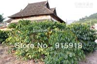 Tree seeds 20Pcs Coffee Tree  Plant seeds free shipping