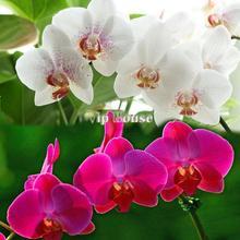 popular plant bonsai