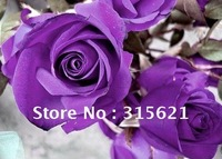 Free Shipping Multi-color Rose Flower seeds 30 Black  30 Purple  30 Green  Bonsai Rose  3Packs/lot