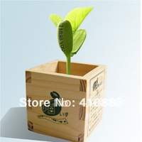 20 pieces 1 lot , 100% Growth Rate Novel English Magic Bean, red Color Jack Bean, w/Sketch, Bonsai, Green Home Decoration