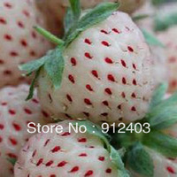 Wholesale 20 pcs  oem package pineapple strawberry  Seeds free shipping