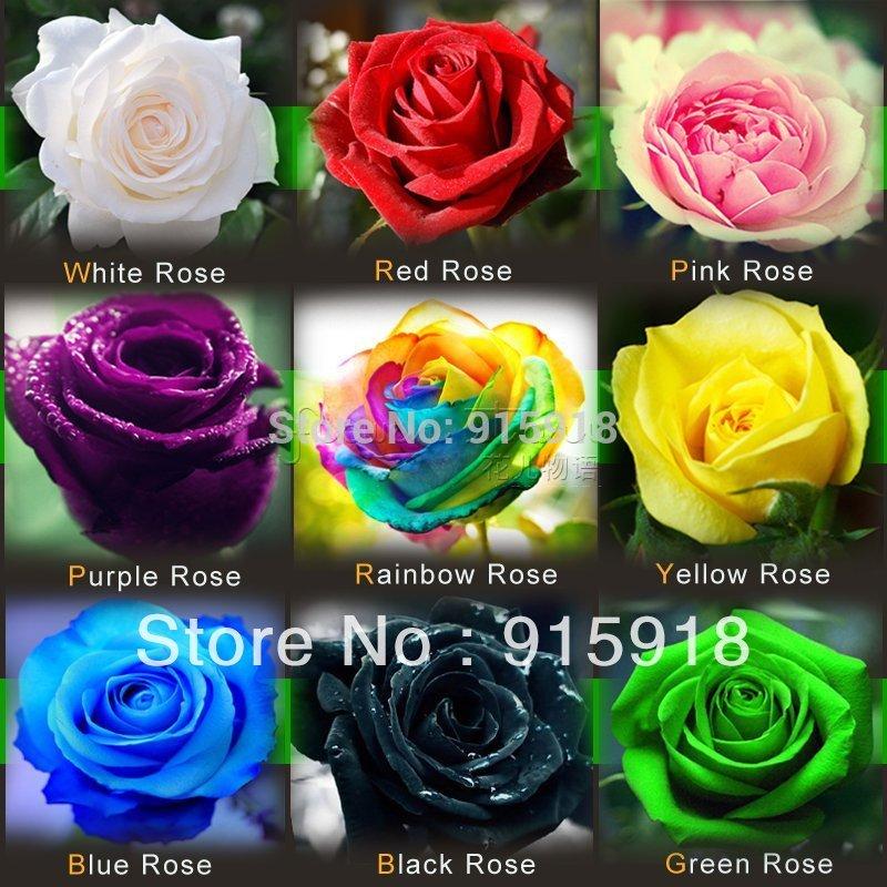 frete grátis 1800 sementes rose sementes incluem rosa pretas brancas verme