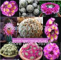 FREE SHIPPING 40Pcs MIXED KK fleshy seeds,Imported cactus hybrid bonsai seeds Succulent plant