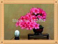 Beautiful Potted Plants, Germany Pink Azaleas Seeds 200 Piece