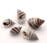 Shell Loose Beads Spiral Natural 28x16mm-16x9mm,50PCs (B22581)8seasons
