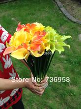 wholesale calla lily