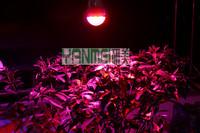 10pcs Free Shipping 7W LED Plants Grow Lamp E14/E27 Indoor 7W Led Plant Grow Lights China AC85-265V LED Hydroponics Spotlights