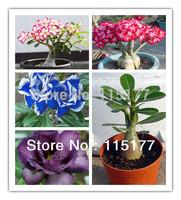 20PCS Multi-Color Desert Rose Adenium obesum Mix Seeds Bonsai Flower For Home Gardening  Free Shpping