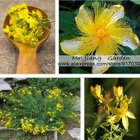 St. John's Wort  Seed * 1 Pack  ( 10 Seeds ) *  Herbs Seeds  * Garden Flower  * Flower Seed Samen * Free Shipping