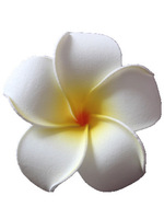 Hawaii frangipani, EVA artificial plumeria flower, hair clip free shipping